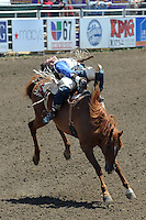 Caleb Bennett, from Morgan, UT hangs on for dear life during Sunday's Day of Champions bareback finale at the California Rodeo Salinas.