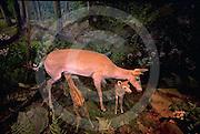 Harrisburg, Pennsylvania Museum, Natural History