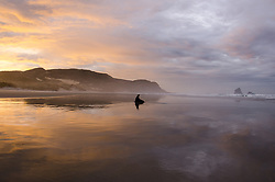 Sandfly Point, Otago Peninsula Phocarctos hookeri