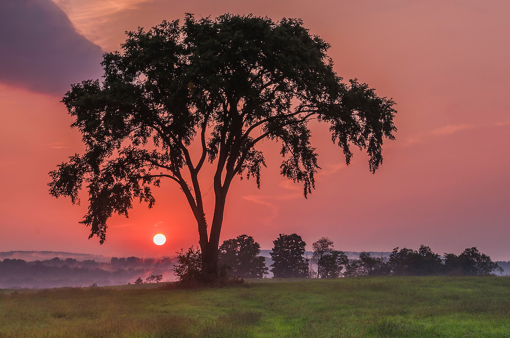 Tree silhouette and filtered sunset in pinks and purples over field in summer, Sheldon, VT
