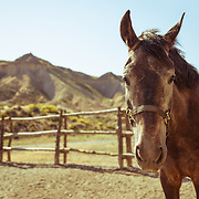A horse in a corral at a ranch in the Tabernas desert, Almeria province, Andalucia, Spain.