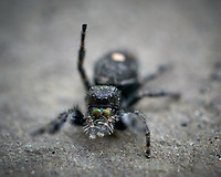 Hairy Spider at my Front Door. Image taken with a Leica TL2 camera and 60 mm f/2.8 macro lens.
