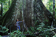 Buttress Root<br />Amazon Rain Forest, PERU, South America