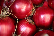 Close up selective focus photograph of a group of Red Onions