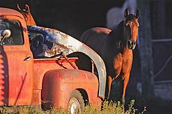 Horse & Old Vehicle