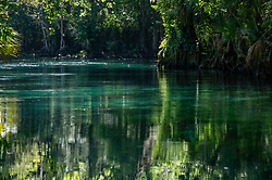Crystal clear water and dense vegetation on the Silver River in Ocala Florida.