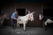 2020 Alwood Donkeys
