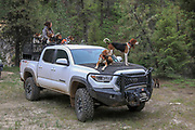 Angie Denny is rigged for bear hunting with hounds in Idaho.