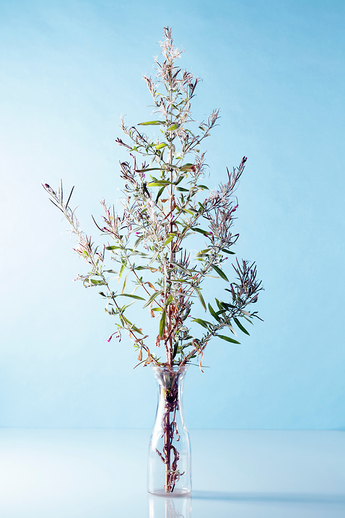 still life with twig of a natural wildflower plant