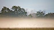Elk in the mist, Jackson Hole Wyoming