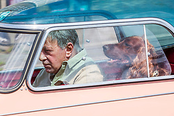 © Licensed to London News Pictures. 18/08/2019. Brighton, UK. A man takes his dog for a ride in a vintage KR175 Messerschmitt car in Brighton and Hove as sunny weather returns to the seaside resort. Photo credit: Hugo Michiels/LNP