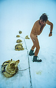 Snow bath while being watched by huskies, dog sledging across Greenland icecap