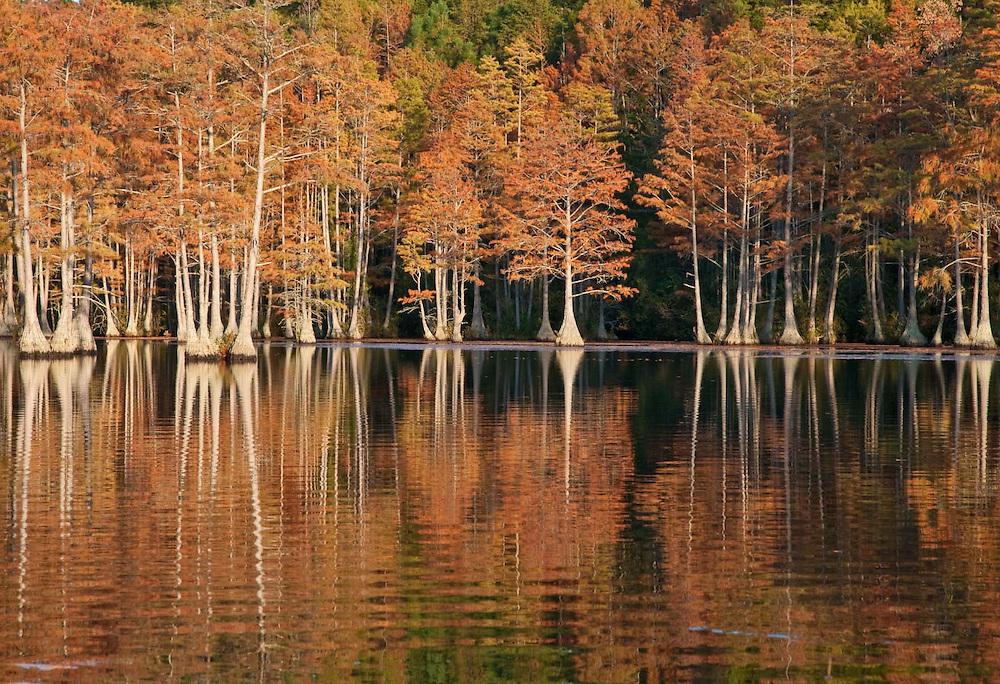 Cypress Reflection 3