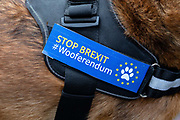 A Stop Brexit. Wooferendum badge seen on a dog during an anti Brexit Wooferendum rally on October 07, 2018 in London, England to protest against Britain leaving the European Union.