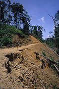 LOGGINGROAD, SOIL EROSION, MALAYSIA. Sarawak, Borneo, South East Asia. Tropical rainforest and one of the world's richest, oldest eco-systems, flora and fauna, under threat from development, logging and deforestation. Home to indigenous Dayak native tribal peoples, farming by slash and burn cultivation, fishing and hunting wild boar. Home to the Penan, traditional nomadic hunter-gatherers, of whom only one thousand survive, eating roots, and hunting wild animals with blowpipes. Animists, Christians, they still practice traditional medicine from herbs and plants. Native people have mounted protests and blockades against logging concessions, many have been arrested and imprisoned.