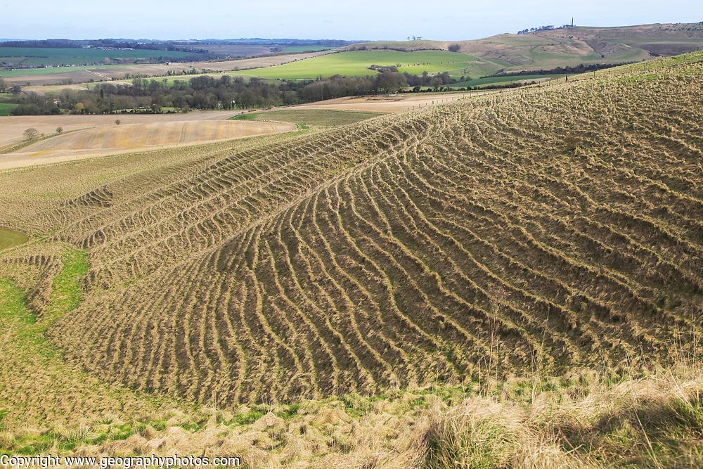 Terracettes on steep scarp slope chalk  landscape, near Cherhill, Wiltshire, England, UK