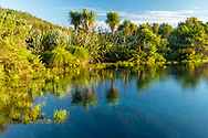 Oceania; New Zealand; Aotearoa; South Island; Golden Bay; Tanaka; Te Waikoropupu Springs;