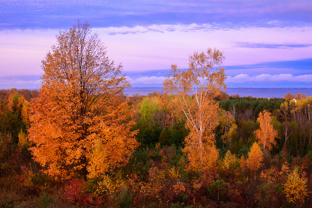 Fall Trees Illuminated By Sunrise