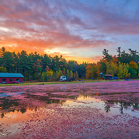 New England fall foliage colors and cranberry bog harvest equipment at the Spring Rain Farm in Taunton, Massachusetts <br /> <br /> New England cranberry bog harvest equipment and fall foliage photography images are available as museum quality photo, canvas, acrylic, wood or metal prints. Wall art prints may be framed and matted to the individual liking and interior design decoration needs:<br /> <br /> https://juergen-roth.pixels.com/featured/massachusetts-cranberry-bog-harvest-equipment-juergen-roth.html<br /> <br /> Good light and happy photo making!<br /> <br /> My best,<br /> <br /> Juergen