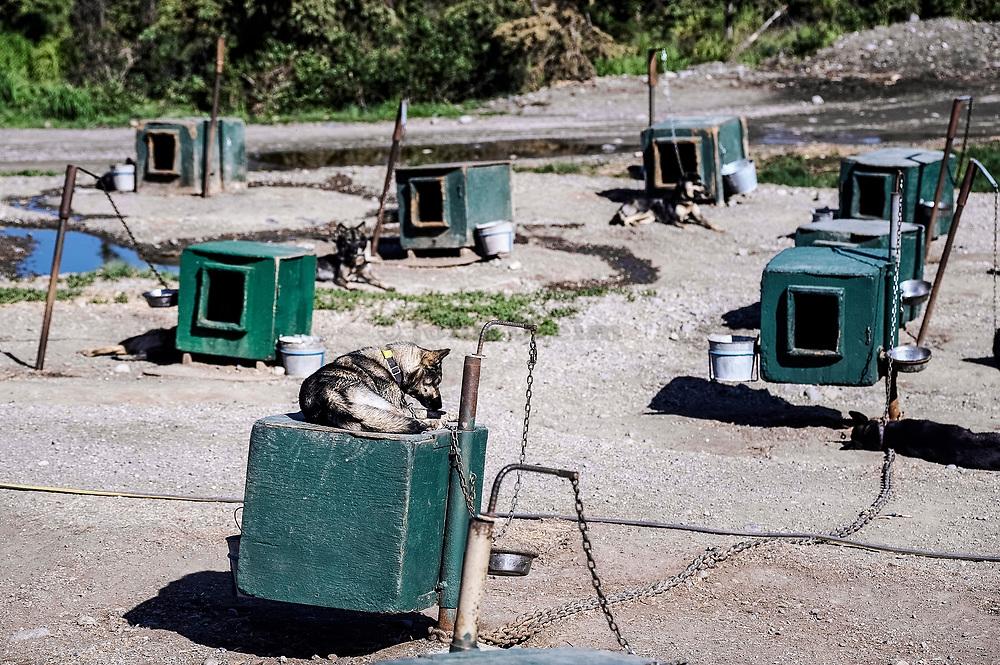 Jeff King's Husky Homestead Kennel, Denali, Alaska, USA.