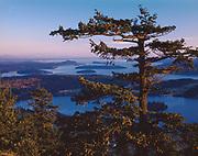 View of San Juan Islands, Douglas-fir tree, Mount Erie Park near Anacortes, Washington, USA