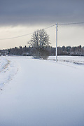 Peaceful winter morning with lonely snow covered gravel road, Vidzeme, Latvia Ⓒ Davis Ulands | davisulands.com