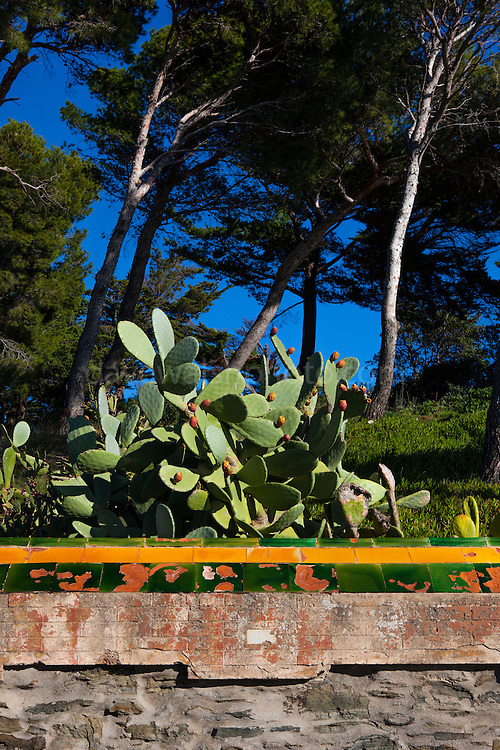 Cactus in Cadaques, Catalonia, Spain.