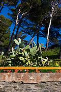 Cactus in Cadaques, Catalonia, Spain.