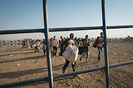 Syrian refugees cross into Turkey fleeing clashes between Kurdish and Islamist forces in the town of Kobani in Syria