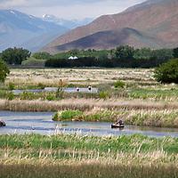 USA, Idaho, Silver Creek. Fly-fishing at Silver Creek Nature Preserve, Idaho.