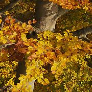 Fall 2011