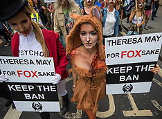 2017-05-29 London protest against May propsal to reopen foxhunting debate.