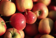 Close up selective focus photograph of a pile of Crabapples