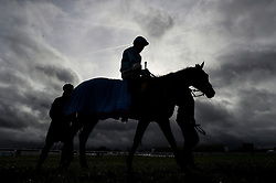 Dogon and Bryony Frost make their way in after the JCB Triumph Trial Juvenile Hurdle during Festival Trials Day at Cheltenham Racecourse.