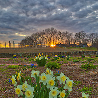 Massachusetts landscape sunset photography of the beautiful Belkin Family Lookout Farm with a bunch of daffodil flowers in Natick, MA.<br /> <br /> South Natick Belkin Family Lookout Farm photography images are available as museum quality photo, canvas, acrylic, wood or metal prints. Fine art prints may be framed and matted to the individual liking and interior design decoration needs:<br /> <br /> https://juergen-roth.pixels.com/featured/belkin-lookout-farm-juergen-roth.html<br /> <br /> Good light and happy photo making!<br /> <br /> My best,<br /> <br /> Juergen