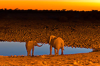 Elephants at a watering hole at sunset, Etosha National Park, Namibia