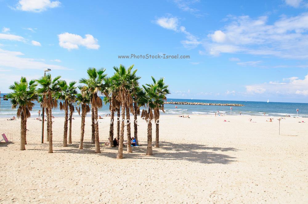 Palmtrees on the Tel Aviv Beach