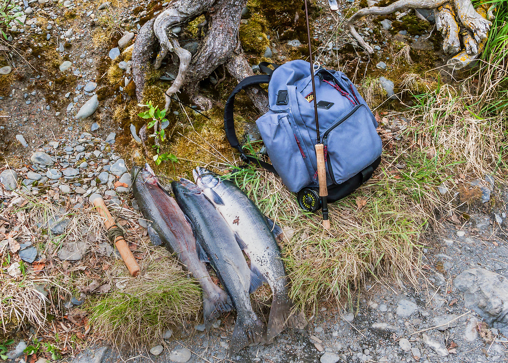 Alaska.  A limit of three Sockeye (red) Salmon (Oncorhynchus nerka) on a stringer layed out on a bit of grass on the bank of the upper Kenai River in June.  A fly rod and daypack rest nearby against the roots of a spruce tree.  The first run of reds into the Russian River is generally small and short, but the quality of the fish is superlative.