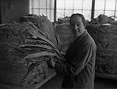1961 - Interiors of W.D. & H. O Wills tobacco Factory at South Circular Road