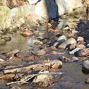 It was a bright sunny morning in February.  The stream was moving and talking.  Hillsborough, NJ