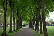 Avenue of trees in Wandsworth Park, West London.