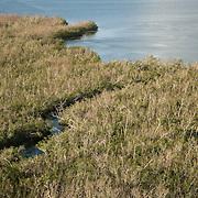 Mangroves in Nichupte lagoon. Cancun, Quintana Roo, Mexico.