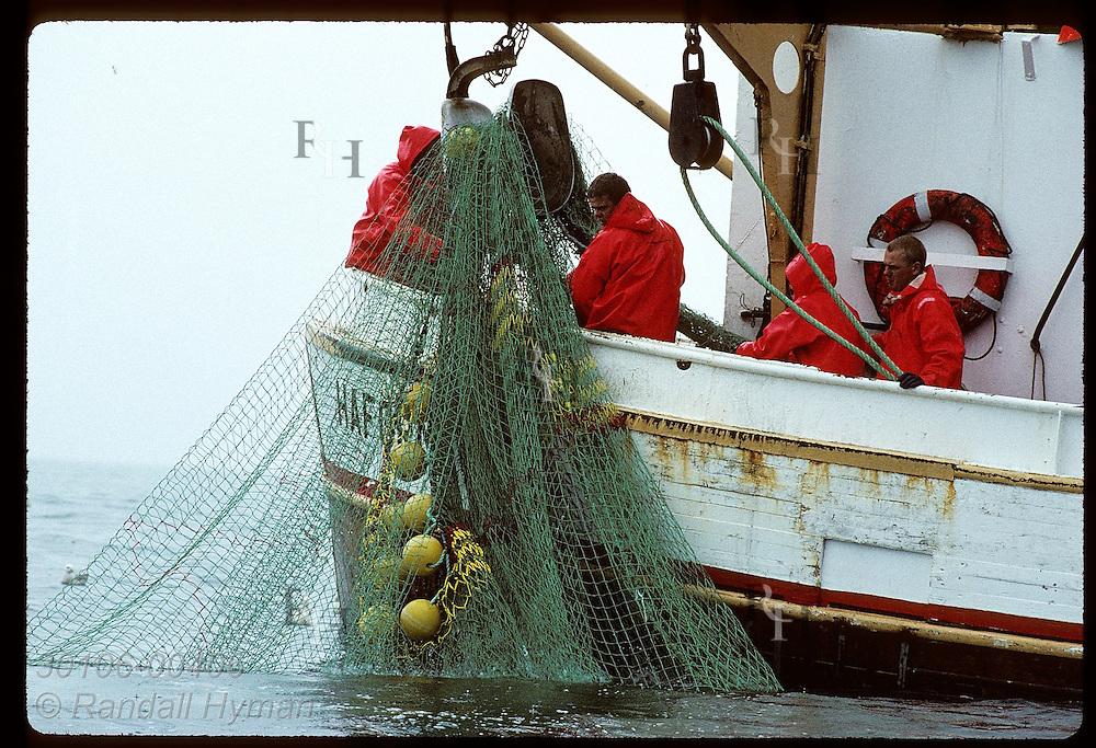 Fishermen gather in stern of gillnet boat to pull fishing net aboard on July day; Faxafloi Bay Iceland