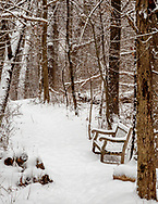 Snow covered bench along hiking trail in Noe Woods of the UW-Madison Arboretum. Photo taken January 13, 2020.