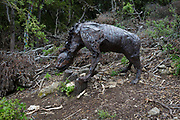 Bones including skulls beneath the fantasy animal artwork entitled 'Belbeth on the Ground' by Colin Castell et Sébastien Garibaldi on the sculpture park trail, on 22nd May, 2017, in Mayronnes sculpture park, Languedoc-Rousillon, south of France