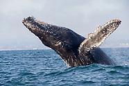 Ocean Wildlife Prints