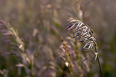 Grass and Weed Royalty Free Stock Images