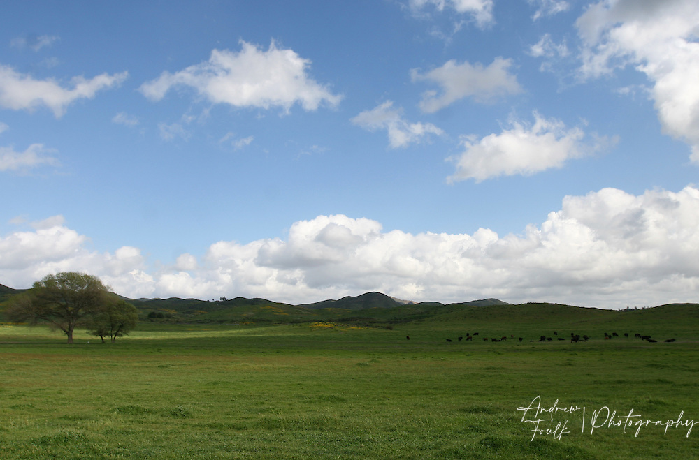 Clouds float across the sky over a cow pasture in Winchester California