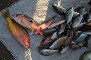 Fish market, Playa Municipal, AKA Playa del Puerto Zihuataneo, Guerrero, Mexico