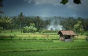 Hut in paddy field, Banyuwangi, East Java, Indonesia, Southeast Asia